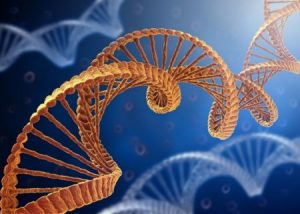The Problems with Genetic Research in Diabetes